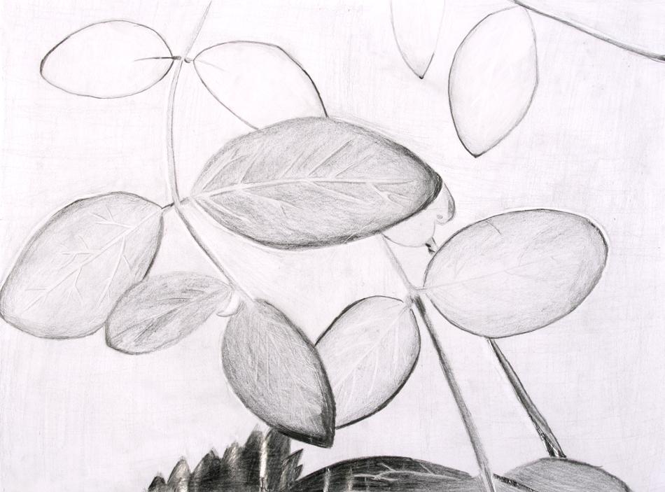 Blätter von Julia (15)