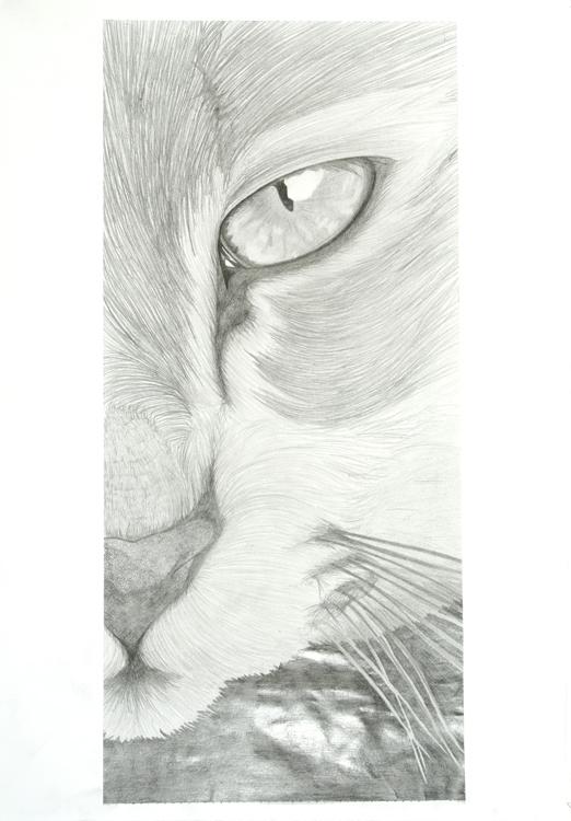Tierauge von Alina (15)