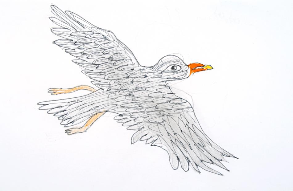 Adler von Svitlana (9)
