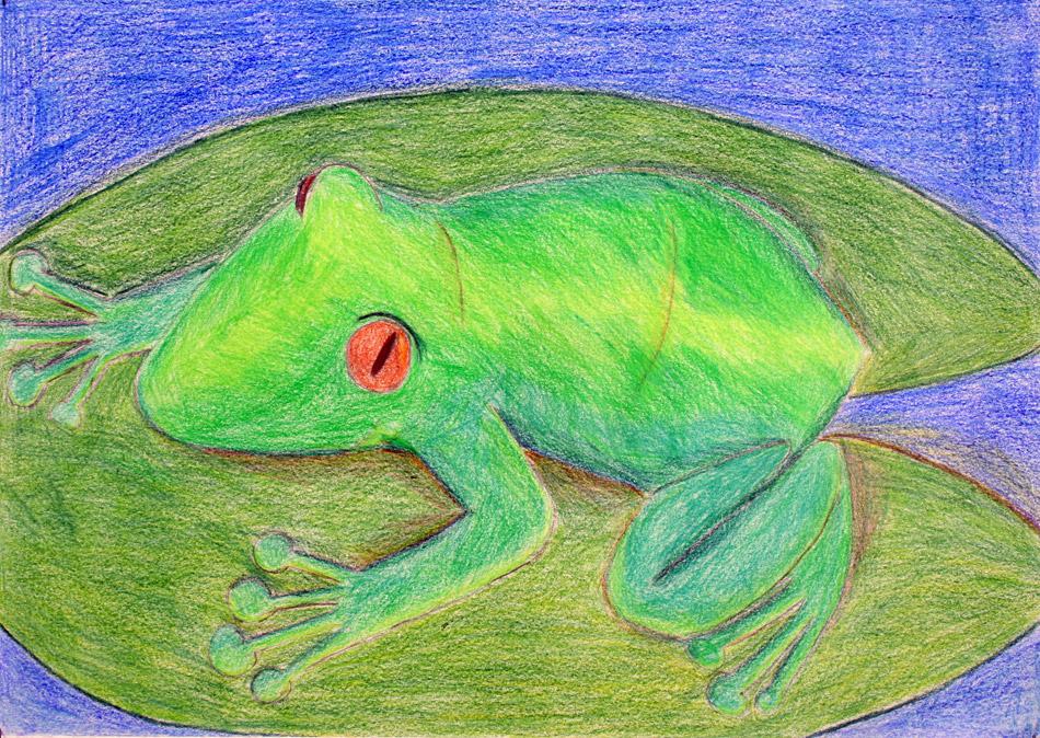 Frosch auf Seerosenblatt von Miriam (15)