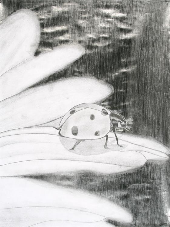 Käfer von Martin (15)