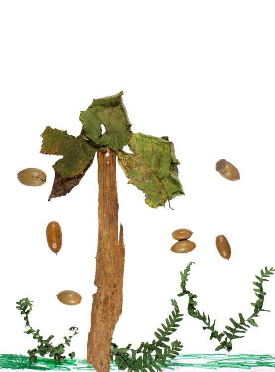 Baum von Suria (7)