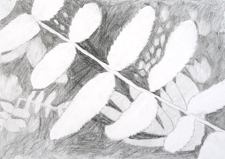 Blätter von Rebecca (15)