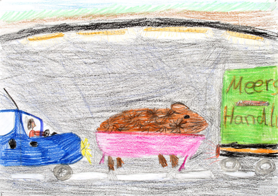 Meerschweinchen Fritz läuft badend im Tunnel von Jaqueline (13)