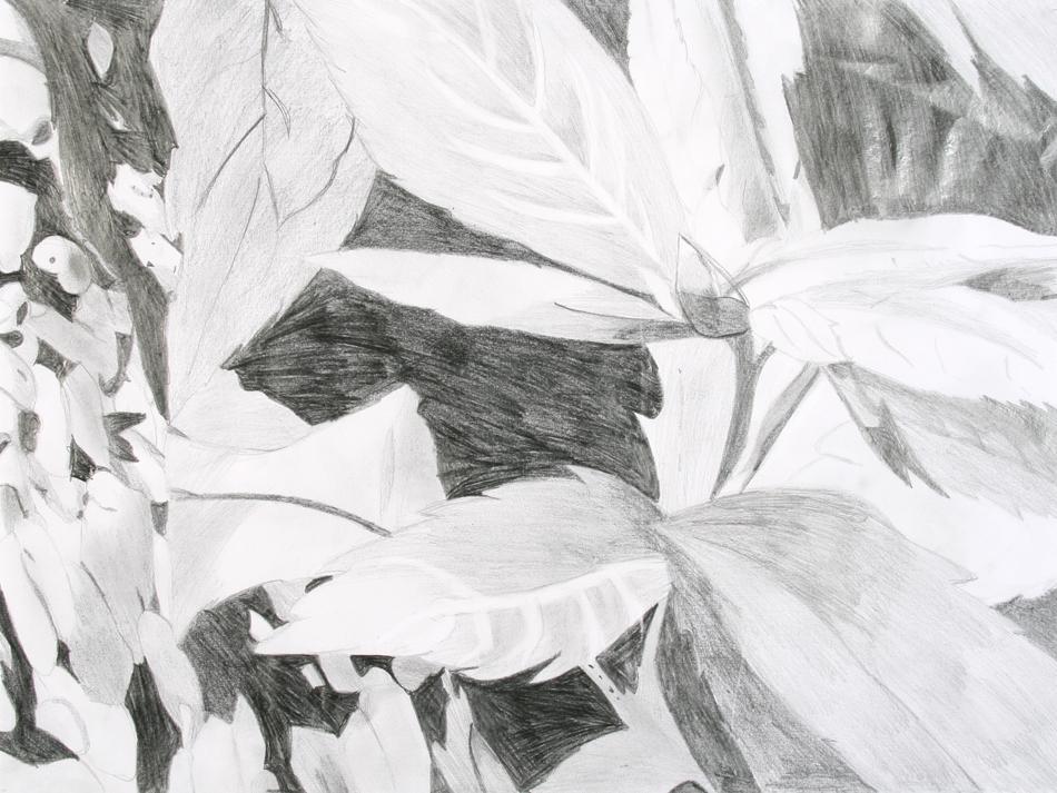 Blätter von Desirée (15)