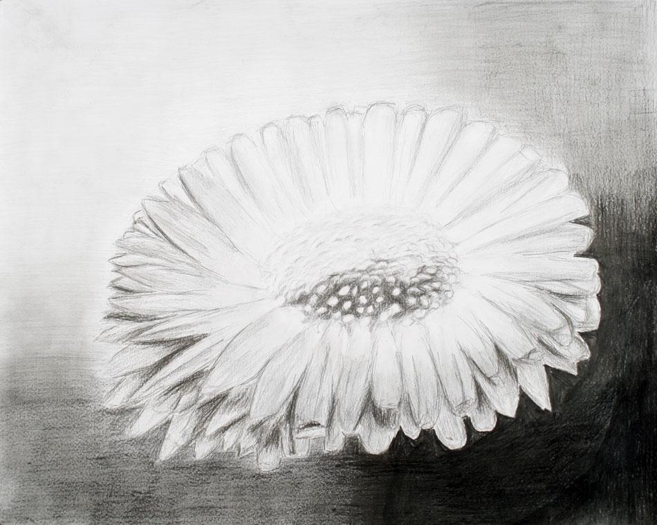 Blüte von Stephanie (16)