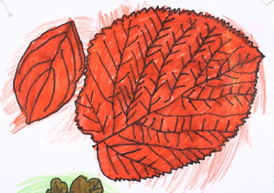 Blätter von Juline (8)