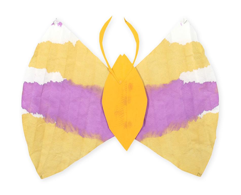 Schmetterling von Ikram (8)